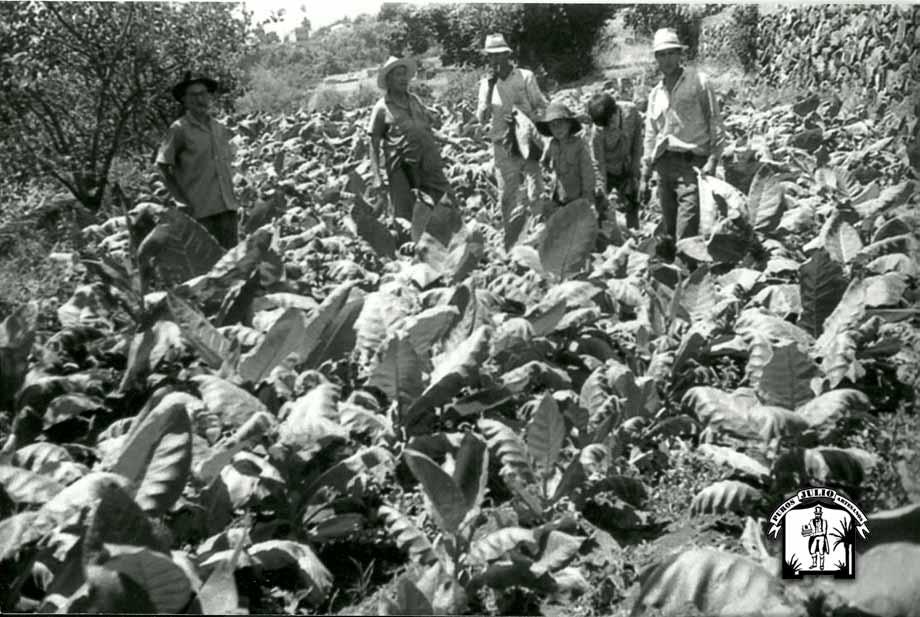 Historia del Tabaco en La Palma 8 · Puros Artesanos Julio · Canarias · Puro Arte Palmero