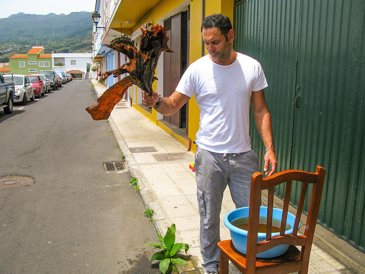 Mojado de las hojas del tabaco · Proceso de Elaboración Puros Artesanos Julio · Tabaco palmero Premium Hecho a mano en Breña Alta. La Palma. Islas Canarias
