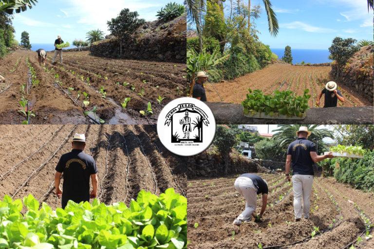 Plantacion_Tabaco_2020_BrenaAlta_Puros_Puros_Artesanos_Julio_La_Palma_puropalmero2